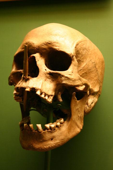 Skull Halloween Stock
