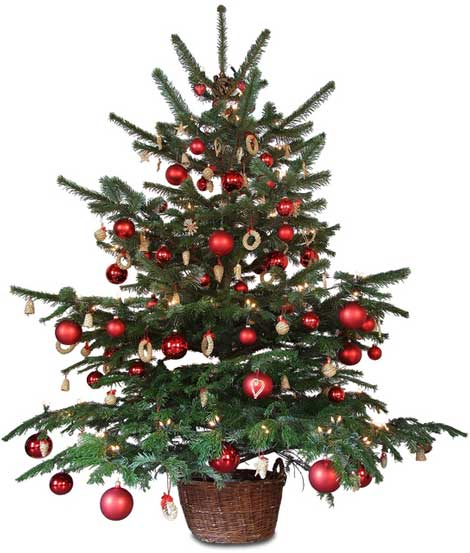 Christmas Tree Stock