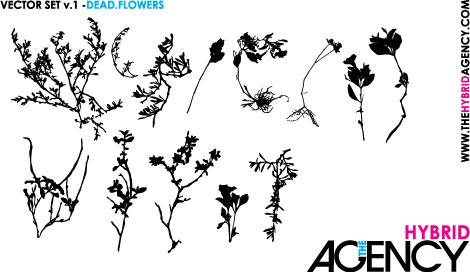 hybrid-flowers