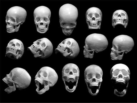 Skull Photos